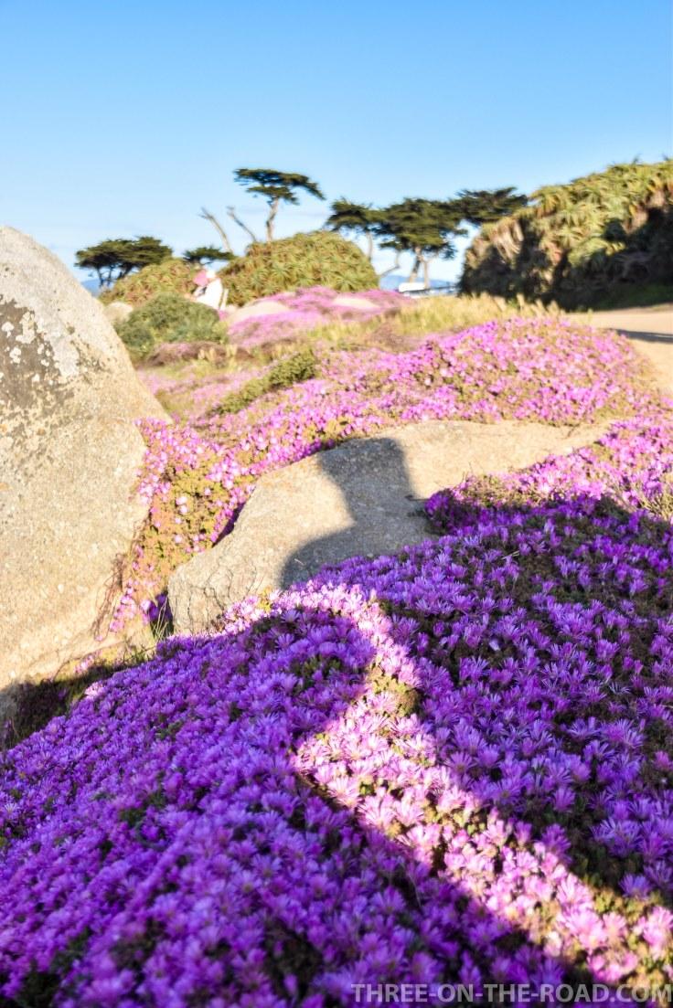 Monterey-1