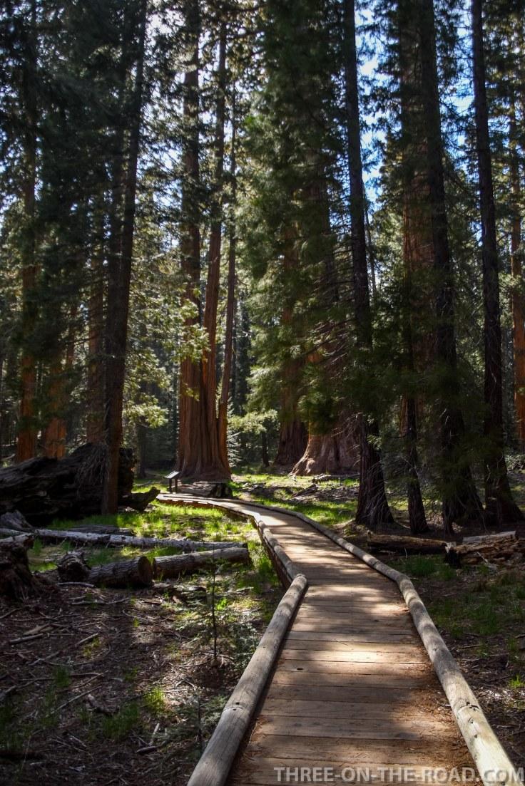 Sequoia-27