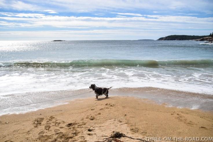 Acadia: Sand Beach, Great Head Trail