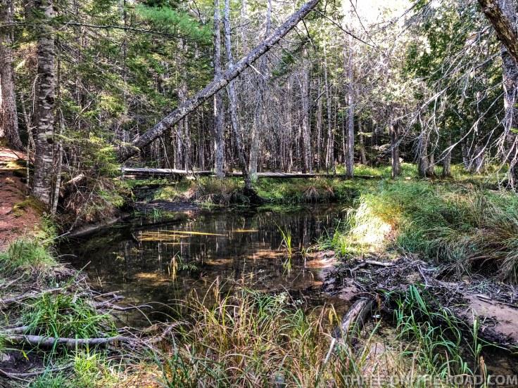 Acadia: Little Long Pond Trail