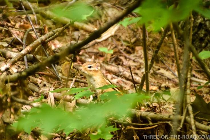Rattlesnake Trail_Lake Squam