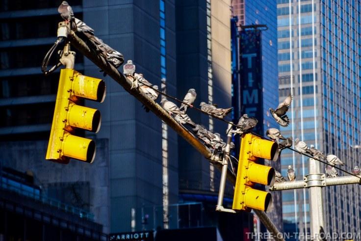 NYC_Flashback-27