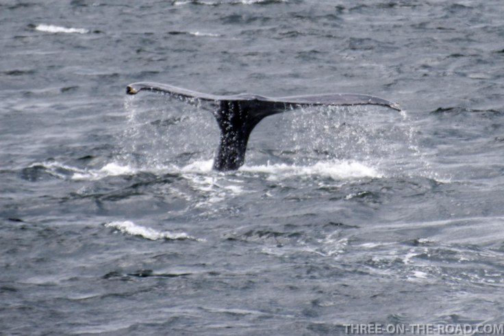 WhaleWatch-10