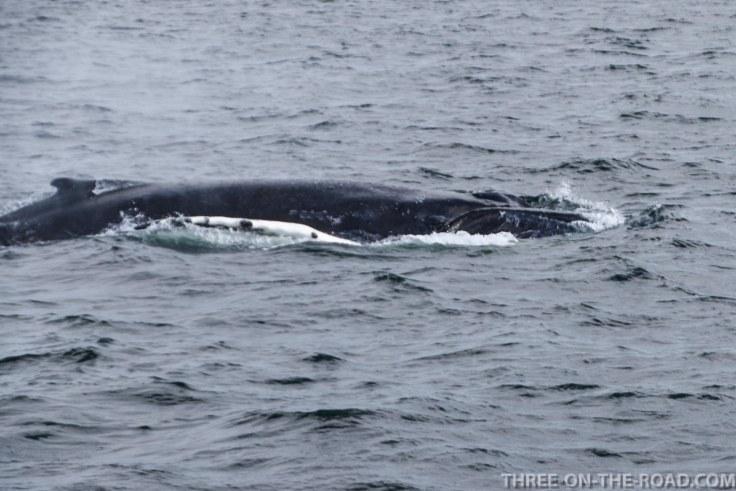 WhaleWatch-5