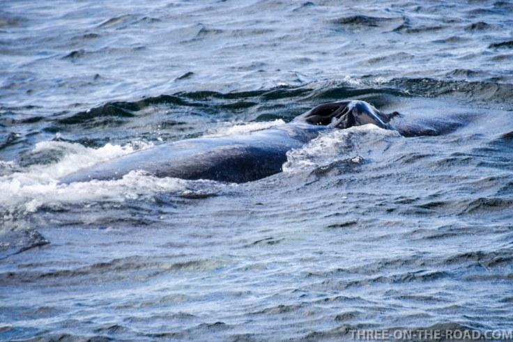 WhaleWatch-6