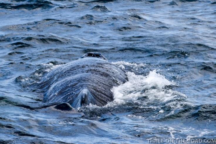 WhaleWatch-7