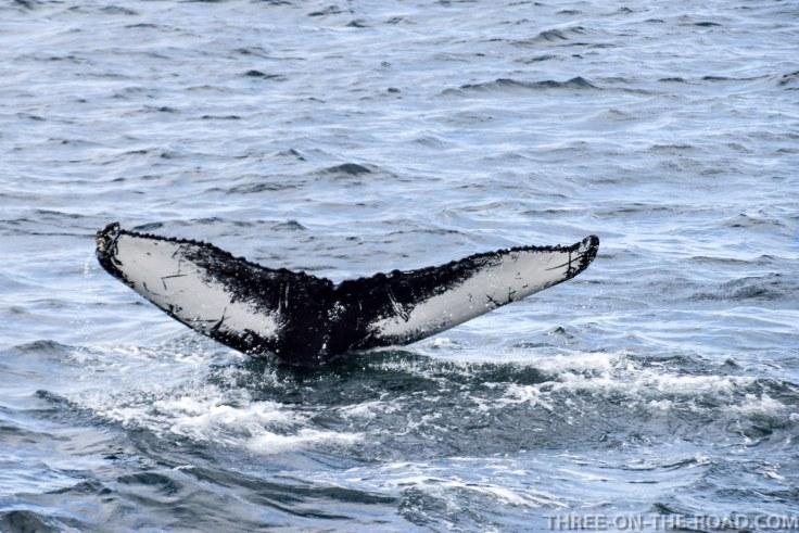 WhaleWatch-9