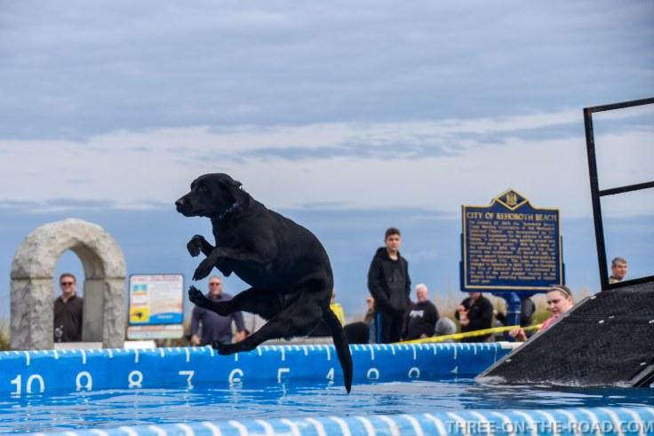 Dog Jump, Rehoboth, DE