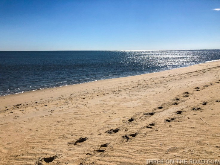 Cape Henlopen S.P., Delaware