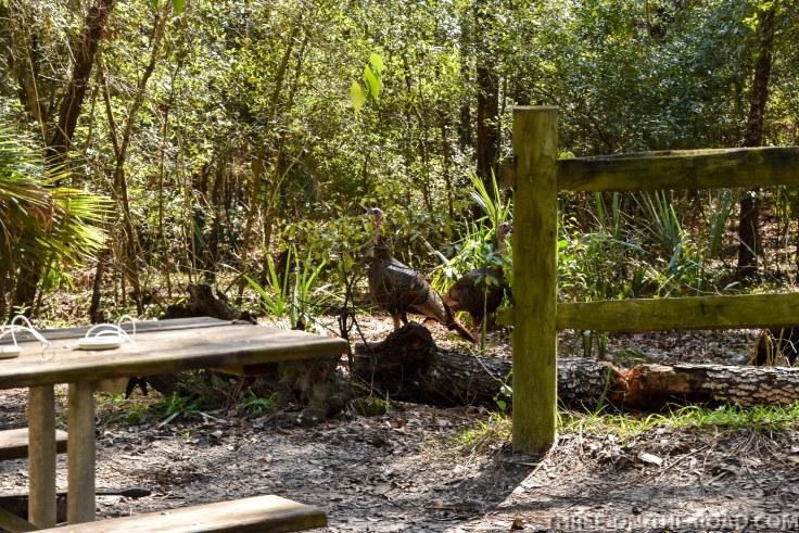 Wekiwa State Park, Orlando, FL